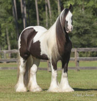 ABC Castle Sweeper, 2005 Gypsy Vanner Horse mare