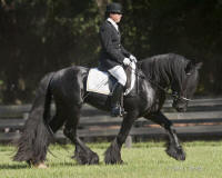 GG Latcho's Shadow, 2007 Gypsy Vanner Horse stallion