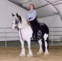 Romany's Ms. Bodi, 1995 imported Gypsy Vanner Horse mare