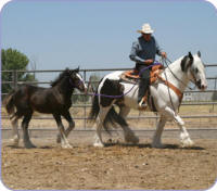 Ms. Bodi and Kaloo, Gypsy Vanner Horse mare and 2004 filly