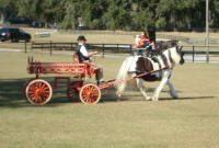 Gypsy Gold's Seventh Heaven, 2004 Gypsy Vanner Horse mare