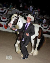 PPGV Selene-Goddess of the Moon, 2013 Gypsy Vanner Horse filly