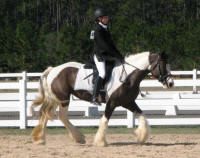 GG The Gypsy Princess, 2010 Gypsy Vanner Horse mare