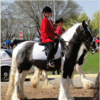 Feathered Gold Jasmyn, 2007 Gypsy Vanner Horse mare