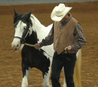 Dinah, imported Gypsy Vanner Horse mare