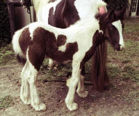 Princess WillowVanner Horse filly