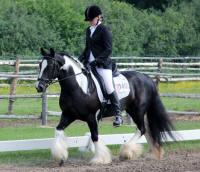 Shimmy of Kastle Rock, 2000 imported Gypsy Vanner Horse mar