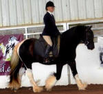 The Impressionist N'Co, 2005 Gypsy Vanner Horse gelding