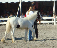 April Bok, 2007 Gypsy Vanner Horse filly