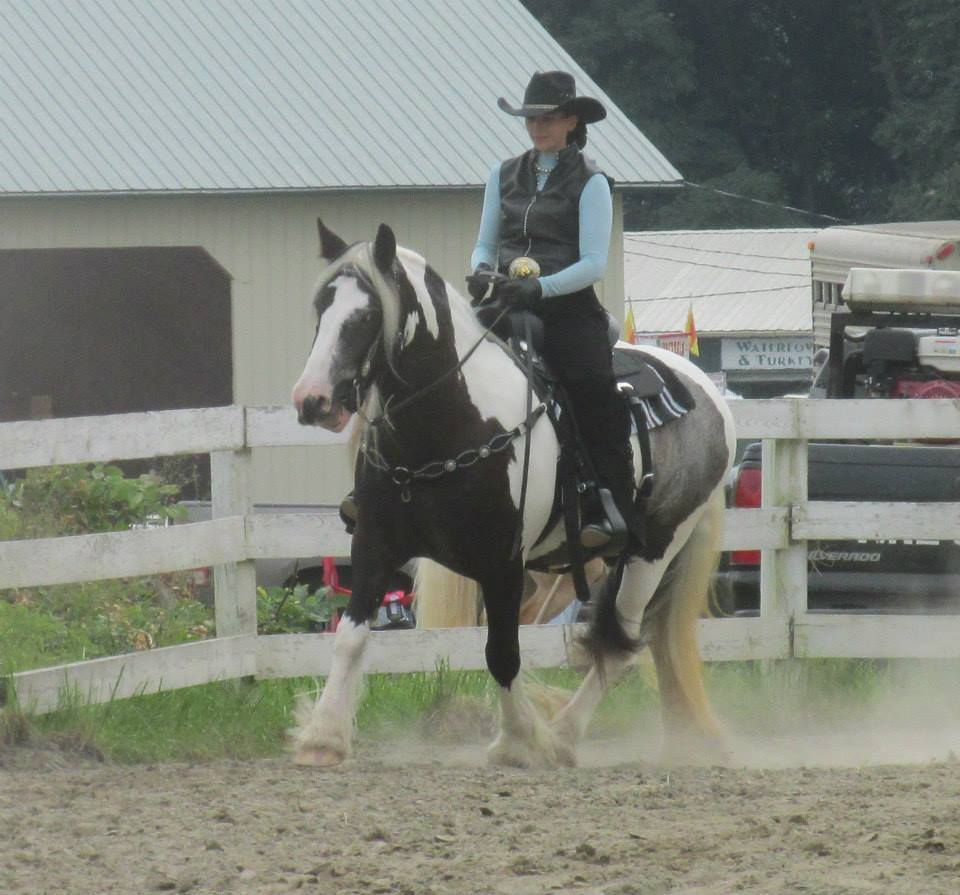 GG Bat Girl, 2007 Gypsy Vanner Horse filly