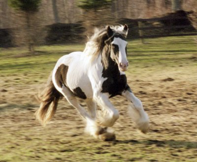 Razzle galloping