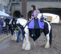 Gypsy Princess, imported Gypsy Vanner Horse mare